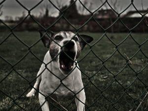 Att misslyckas med hundträningen